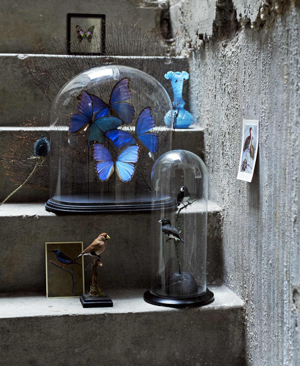 Glazen stolp met blauwe vlinder