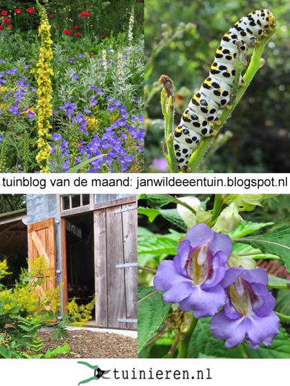 tuinblog janwildeeentuin