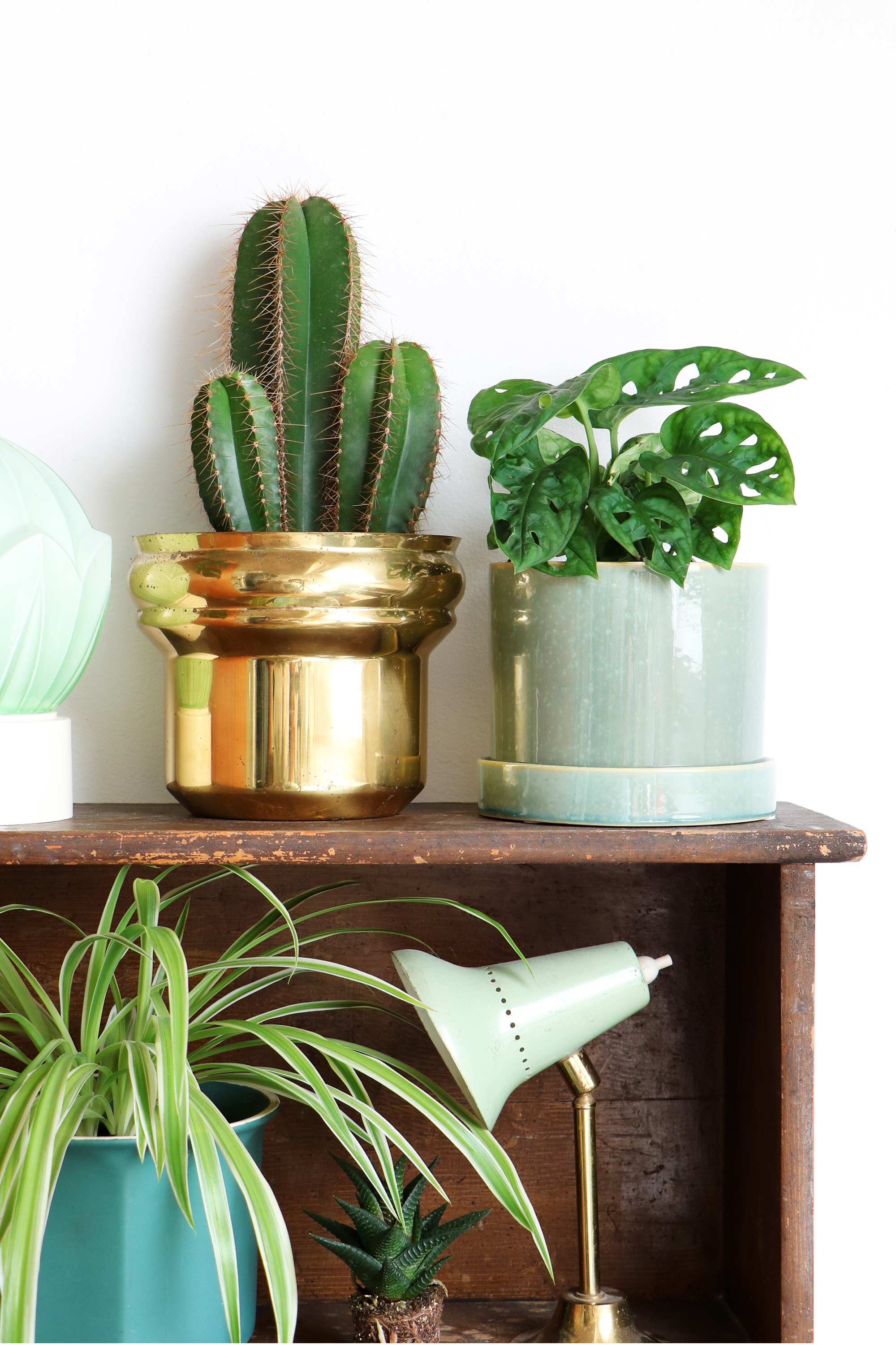 Monstera obliqua plant en cactus in gouden pot