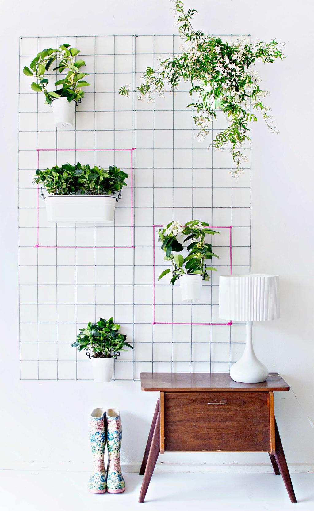 plantenrek