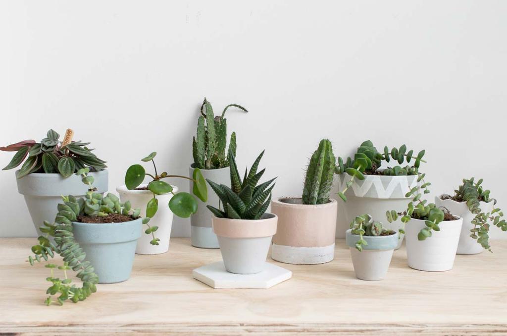 Planten in pot voor in platenkastje