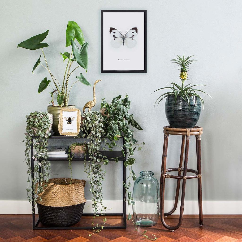 Instagramaccount Everydeco met oog voor plantenstyling