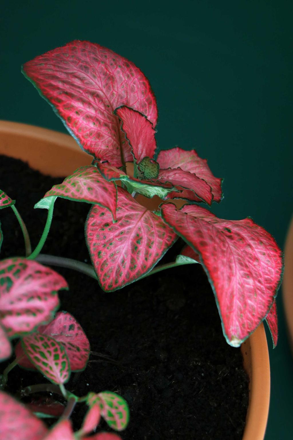 Herfst in huis Calathea plant My Attic