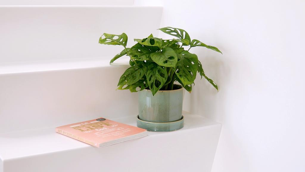 vtwonen-voorjaarshuis-favorieten-aurelie-green lifestyle store kamerplant monstera monkey mask