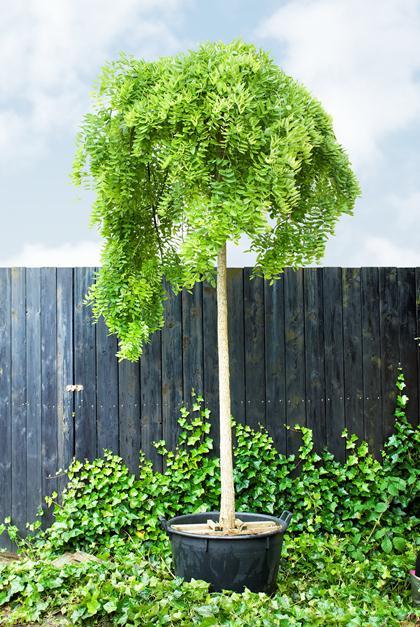 Bomen Voor In De Tuin.Boom In De Tuin Boom Kiezen En Planten Vtwonen Be