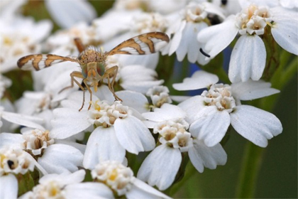 eigenwijzetuin.be: vlinder tuinblog