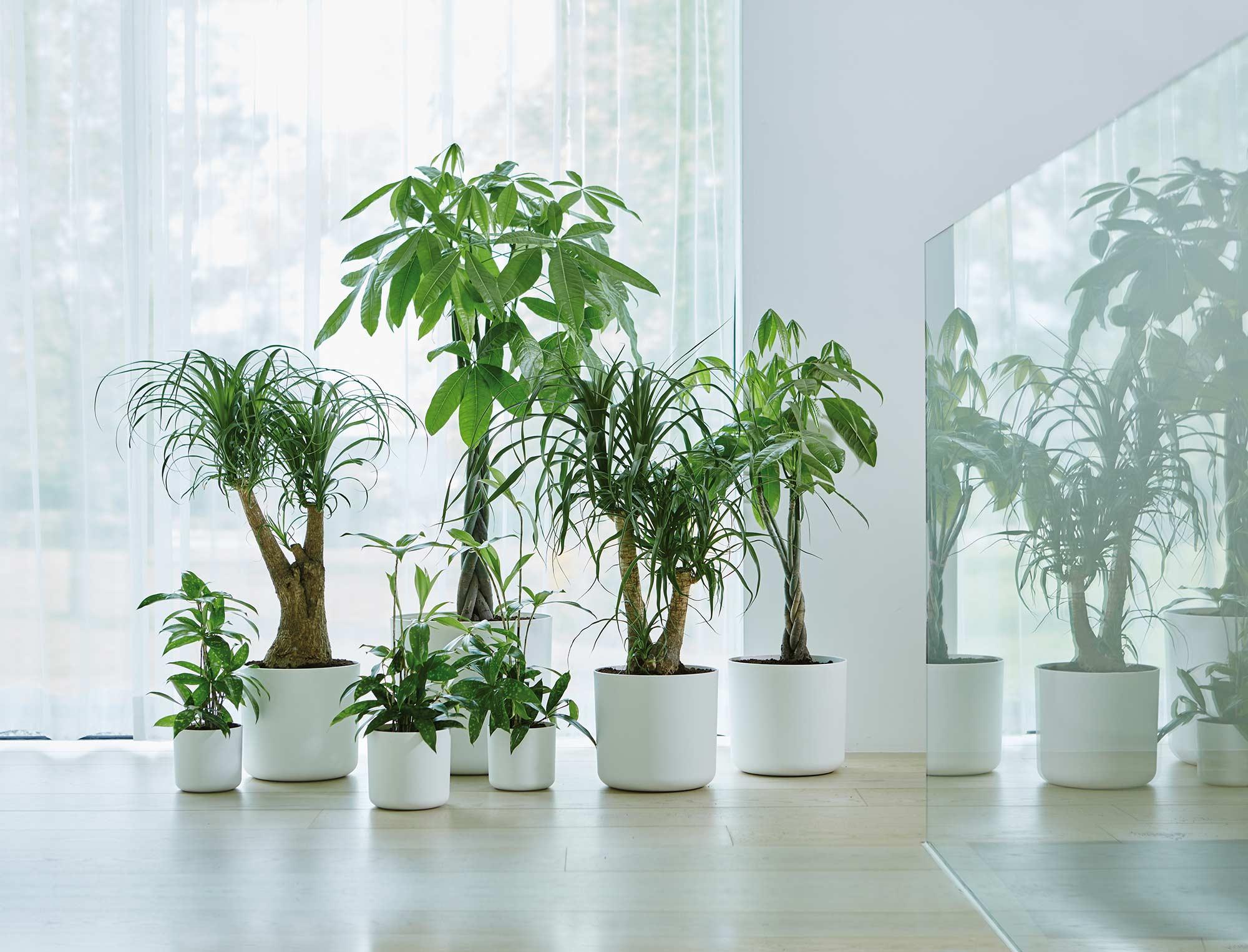 planten verzameling