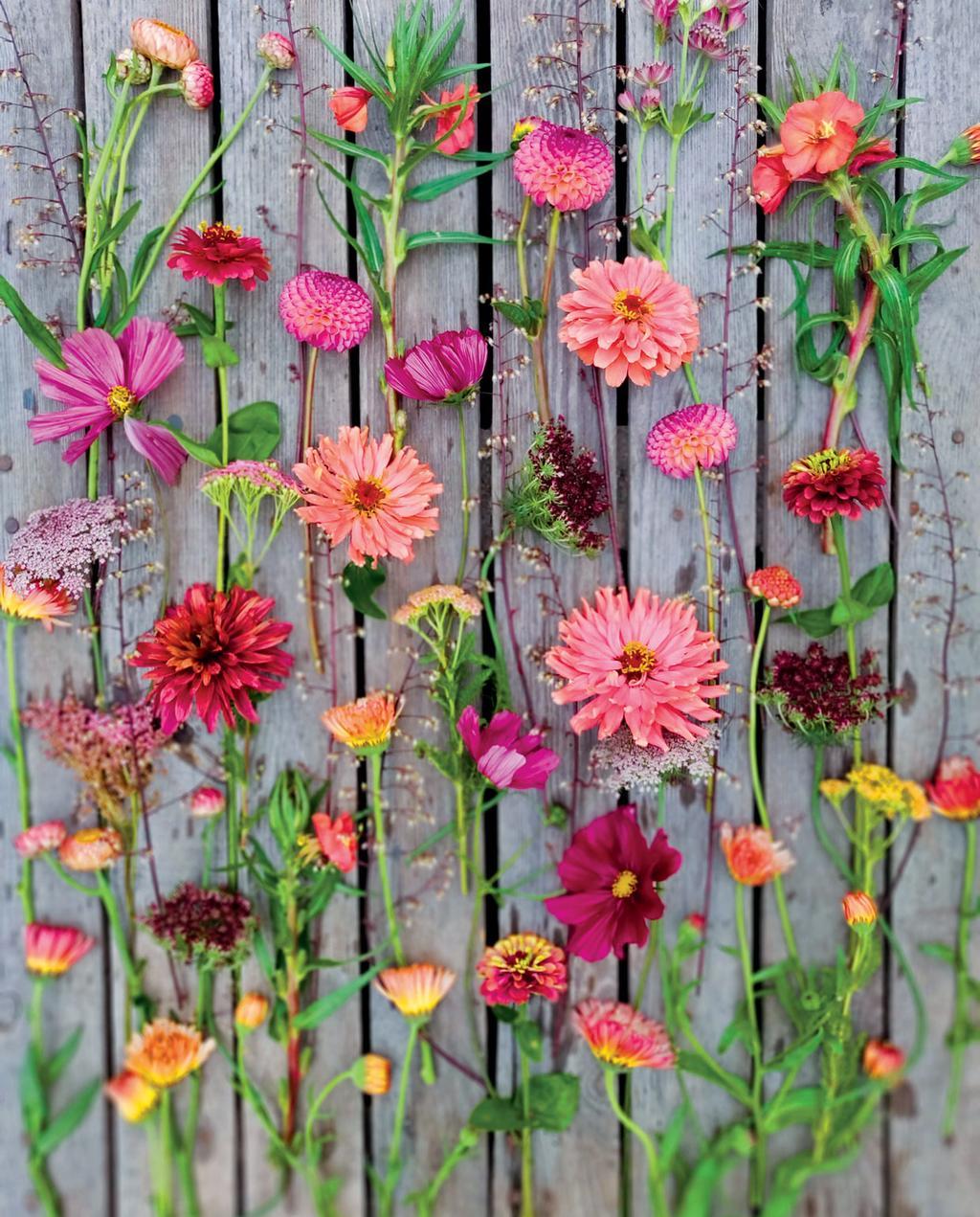 roze gele en oranje plukbloemen op hout