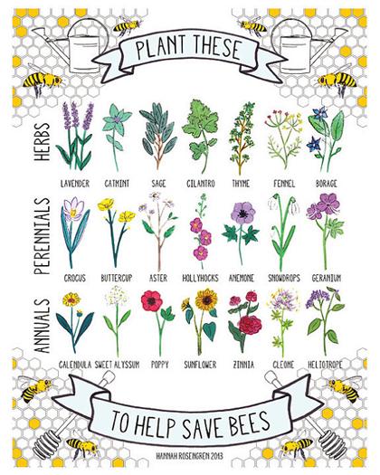 Planten voor bijen