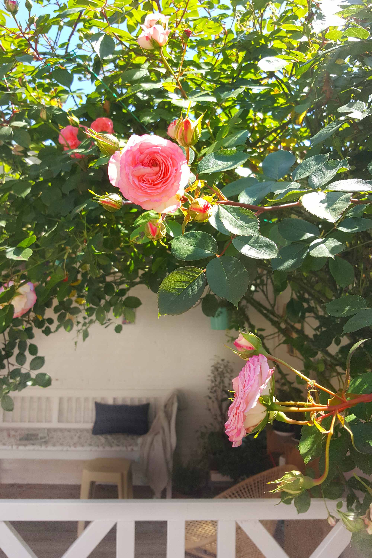 Mamoesjka bloemen