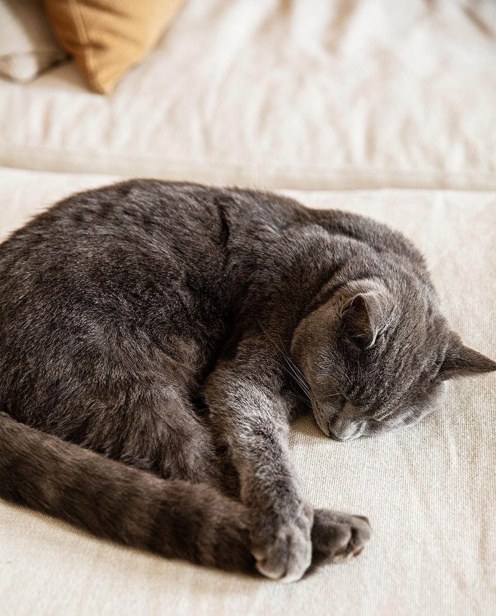 vtwonen 08-2021 | kat op het bed