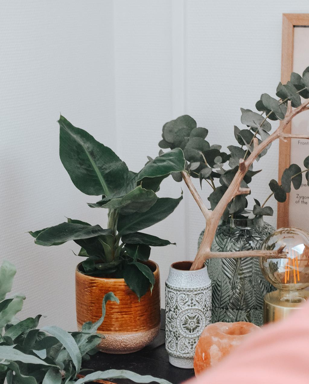 planten in vintage potten