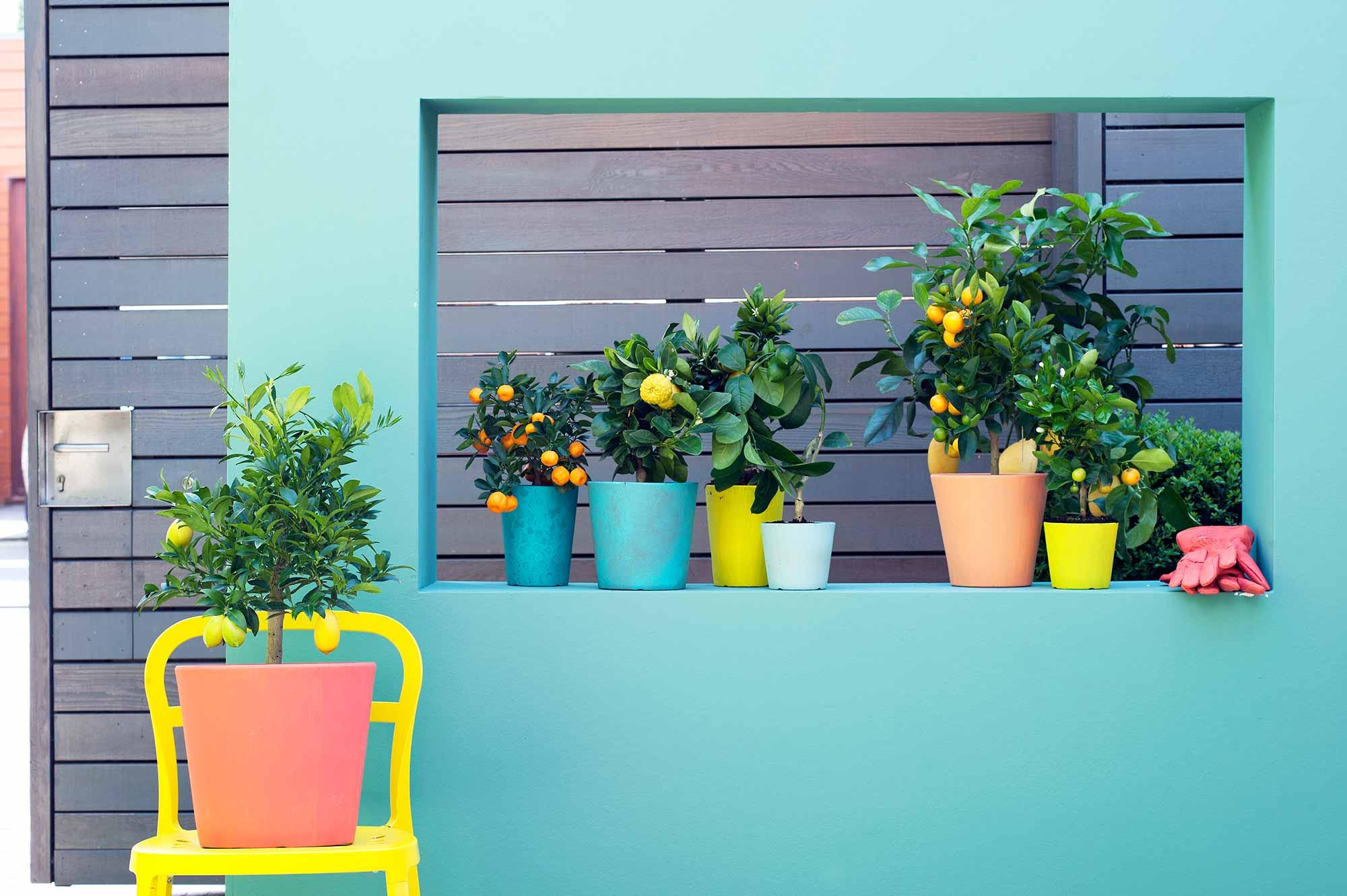 citrus planten kleurrijk muur