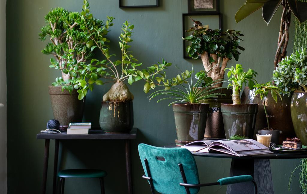 vt tv | stylingtips van marianne groen in huis kamerplanten op de tafel met een groene fluwelen stoel