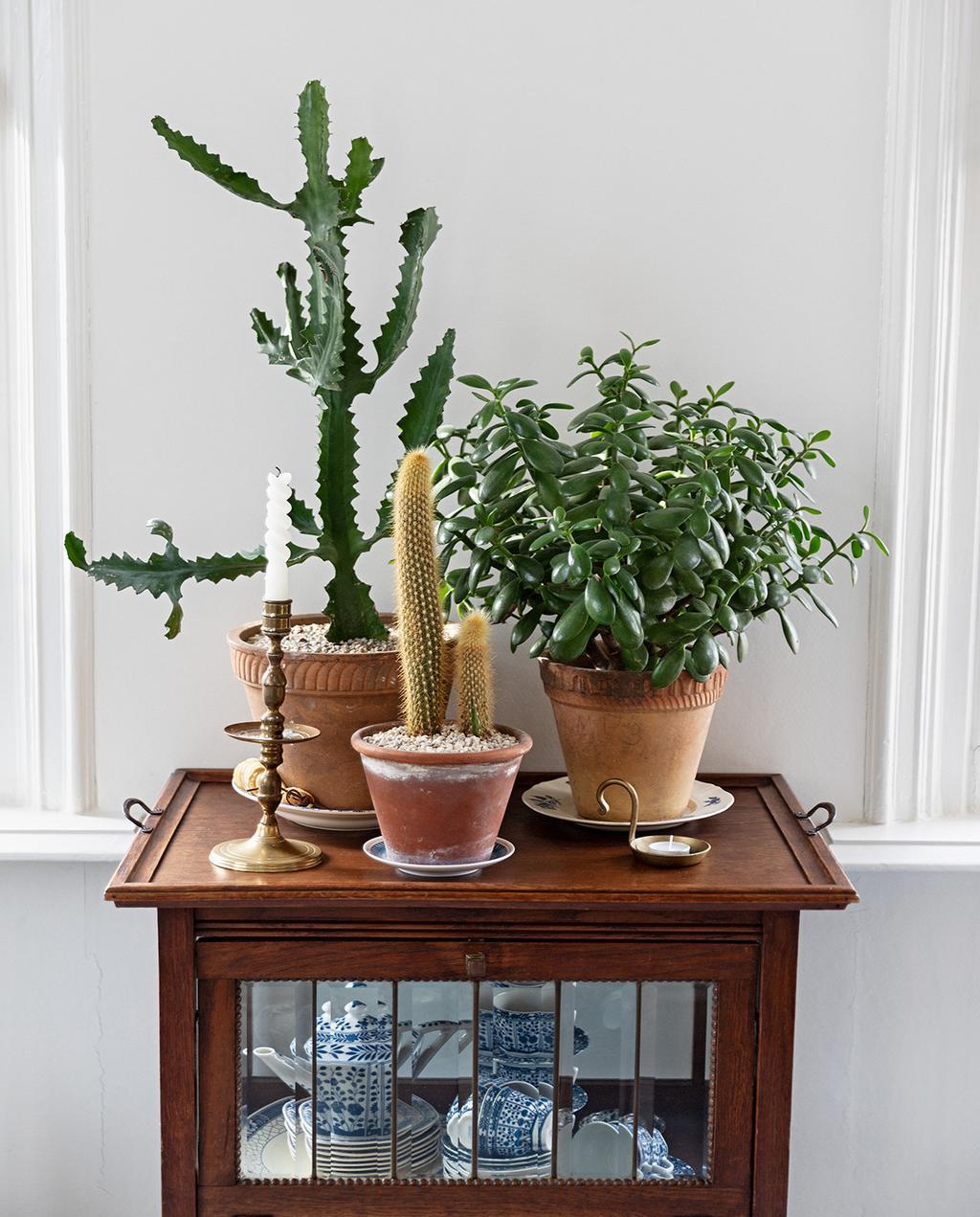 vtwonen 04-2021 | kast met planten en vintage items