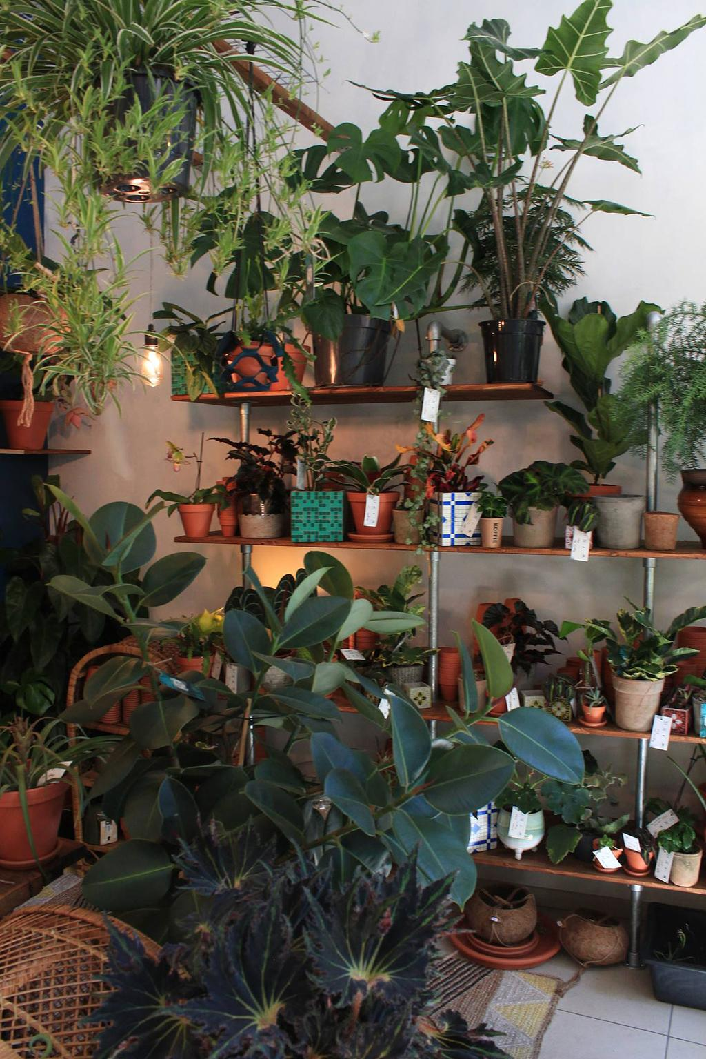 Verschillende soorten planten bij het plantenkaffee Broesse te Gent