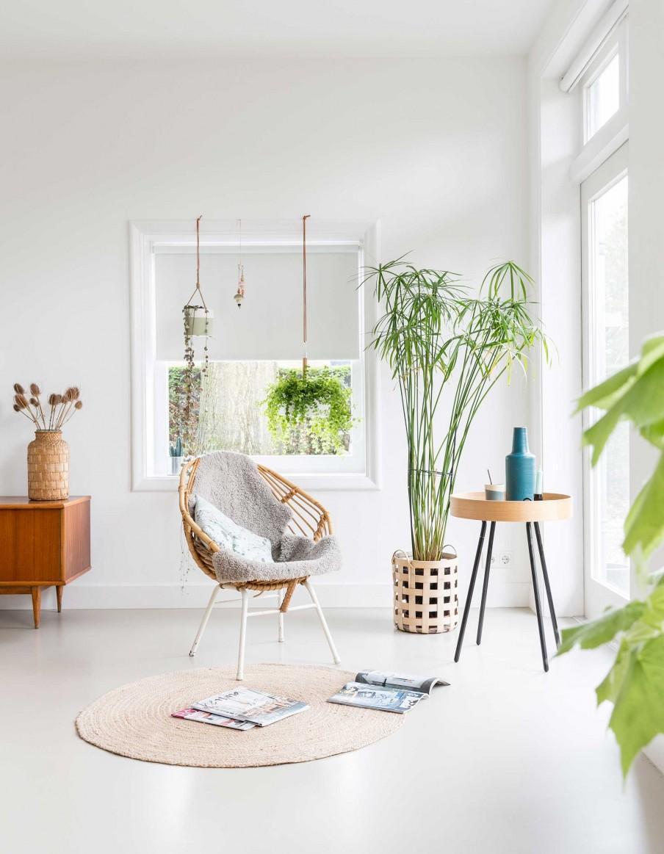 chaise plantes