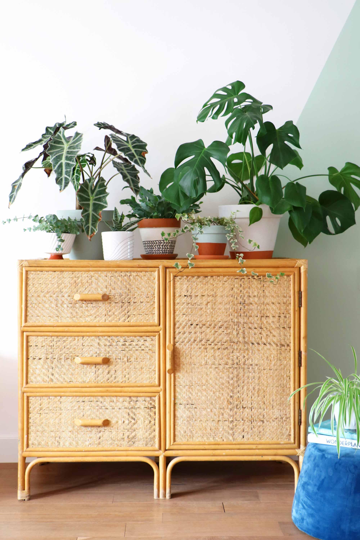 jungalow style planten