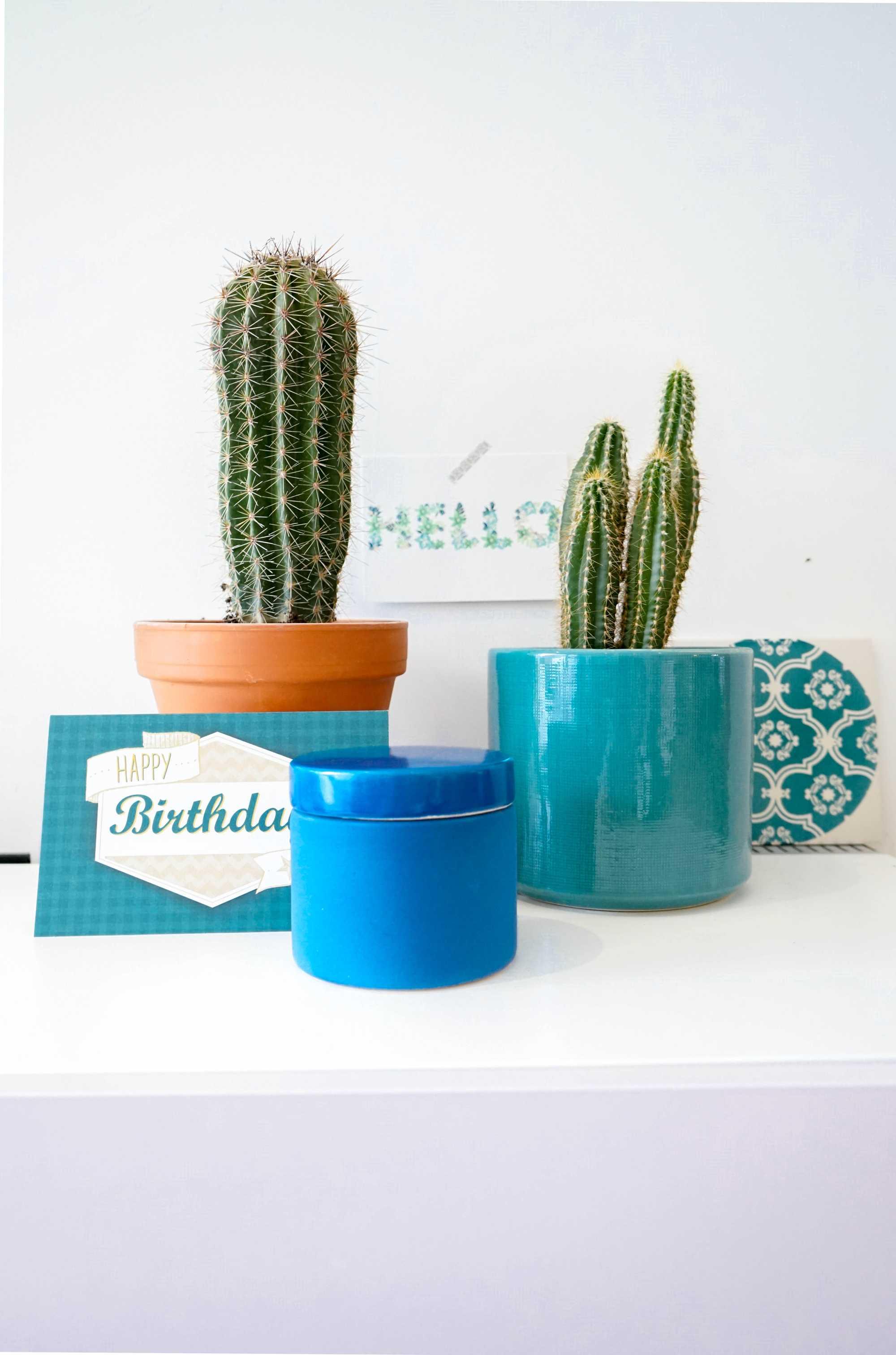 blauw cactus pot