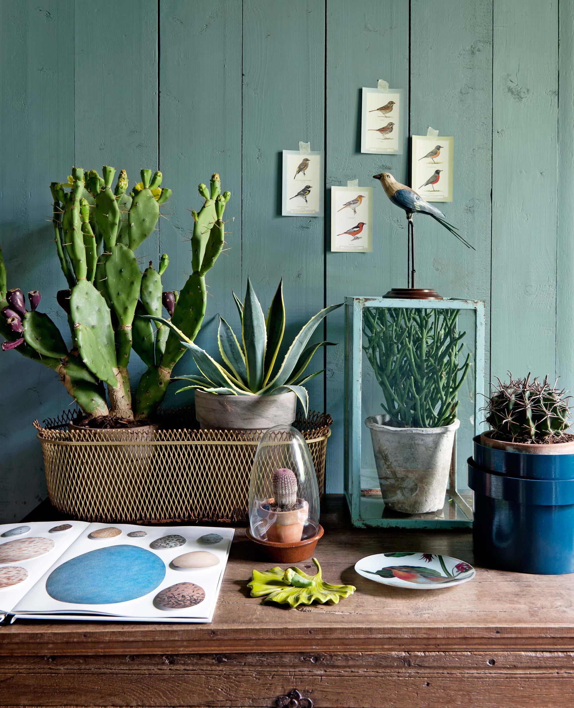 bohemien-planten