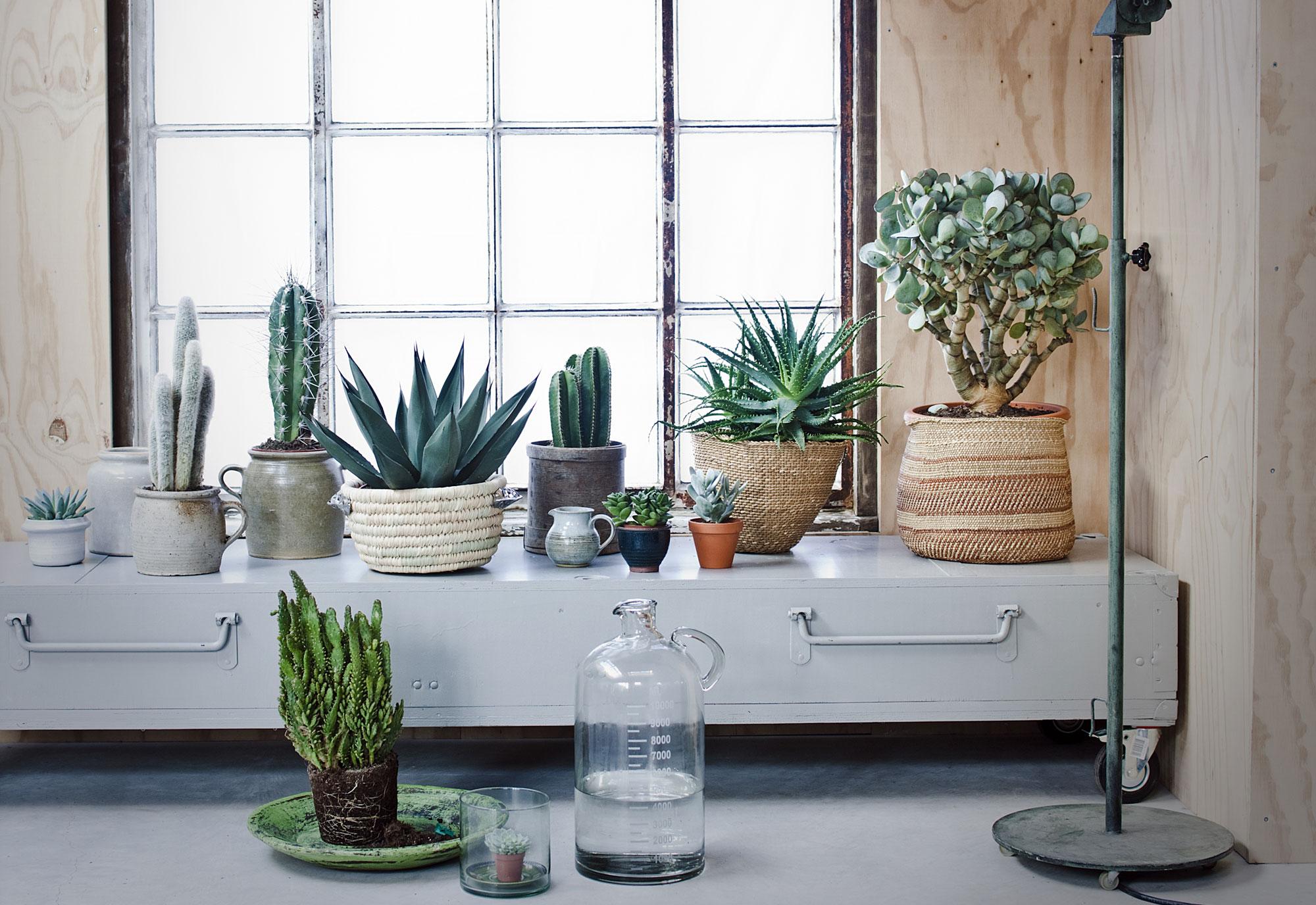 6 decoratie ideeën voor de vensterbank