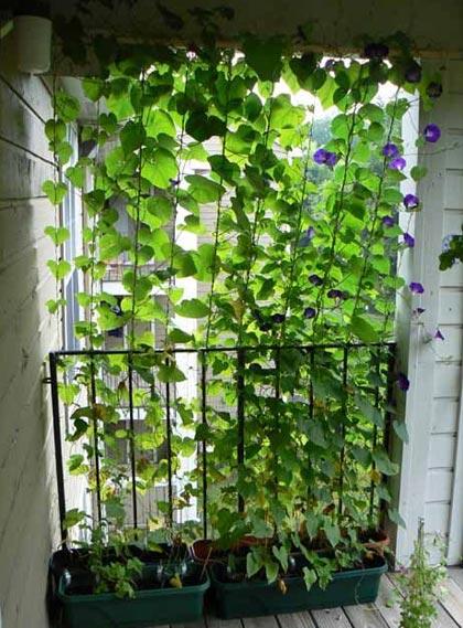 privacy in de tuin