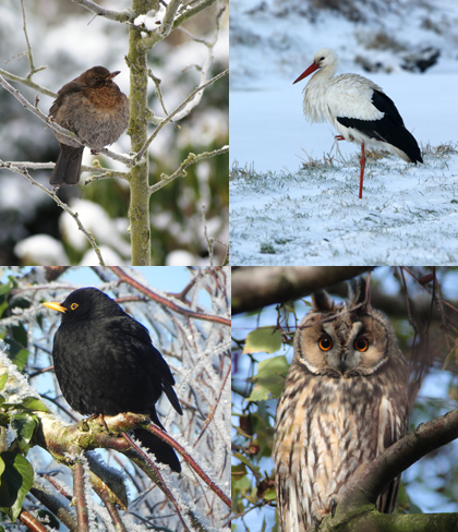 vogels-winter