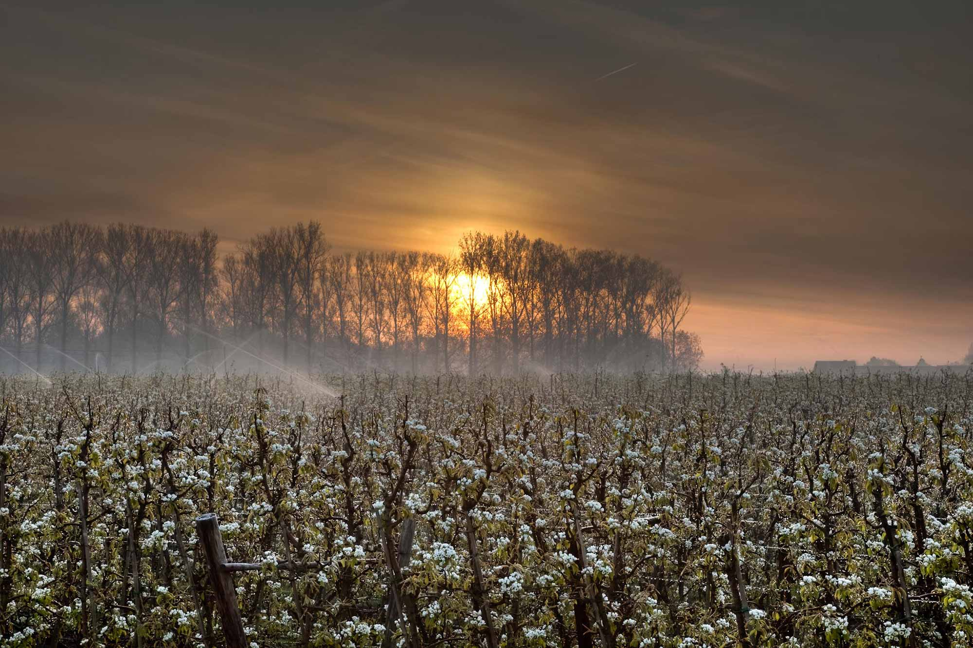 bloesem zonsondergang natuur