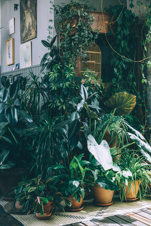 groene oases