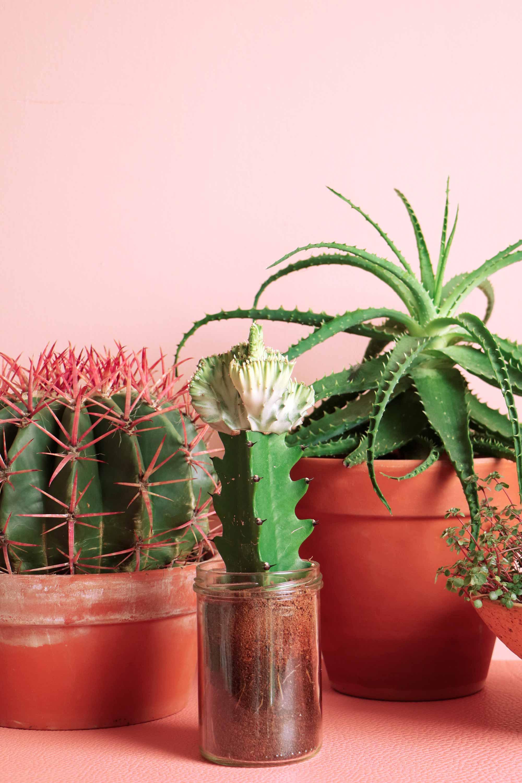 """plants"