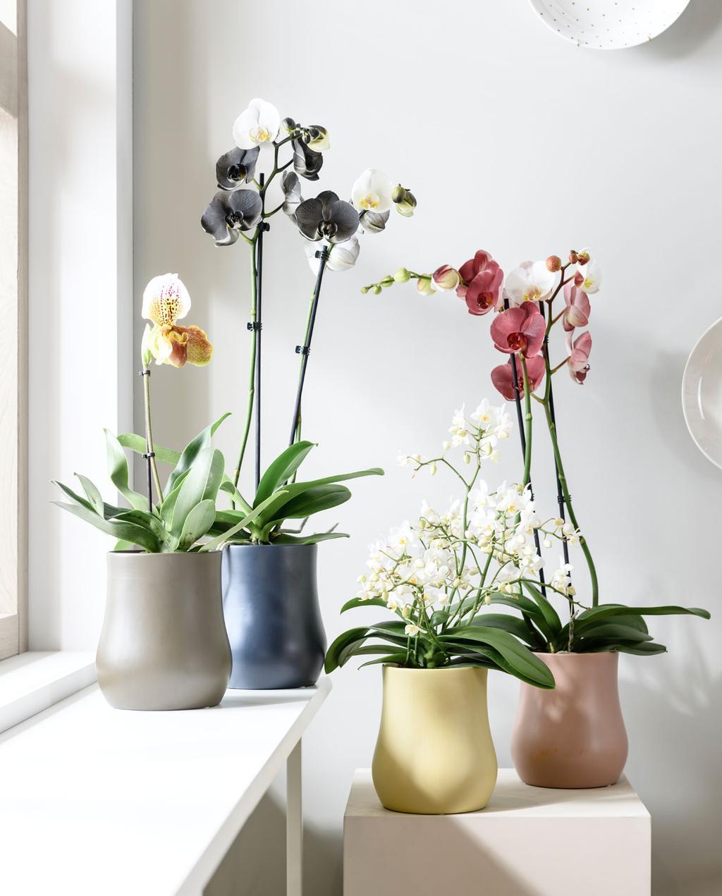 vtwonen-ahactie-orchidee