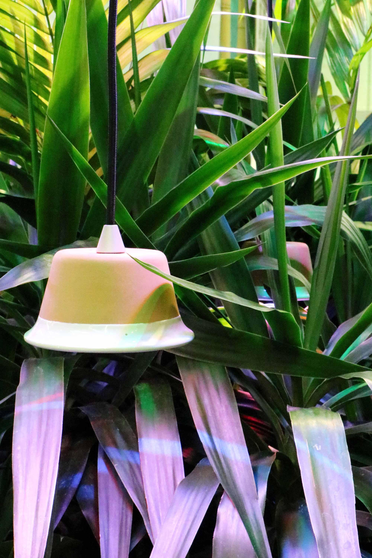 greenhouse festival planten groen