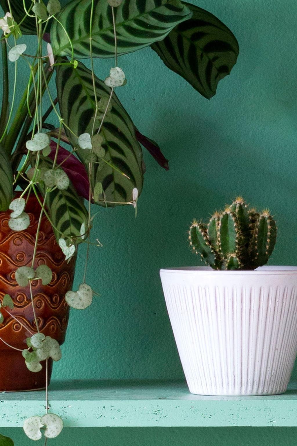 Cactus op een groene plank
