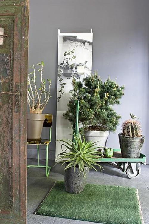 levend groen in huis