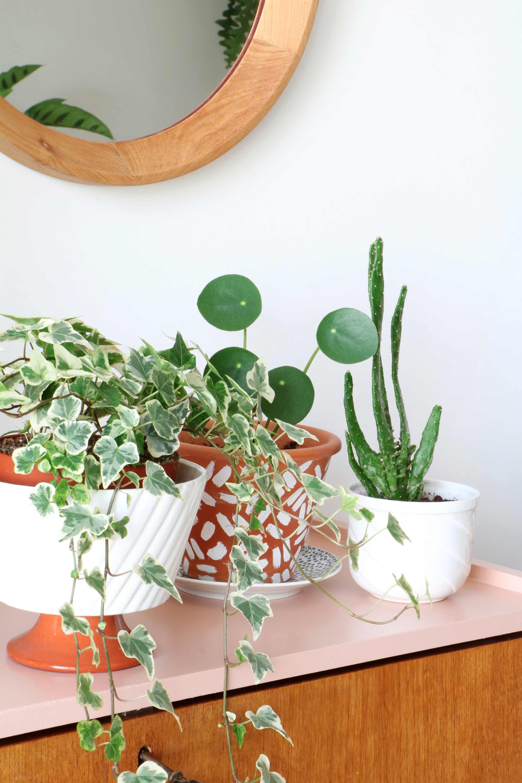 diy terrarium plant