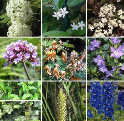 populairste-planten