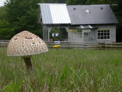 gazon met paddenstoelen