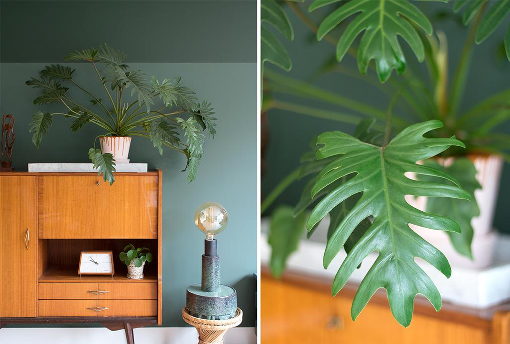 Blog My Attic Philodendron