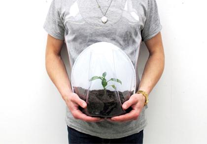Zwanger van een plant