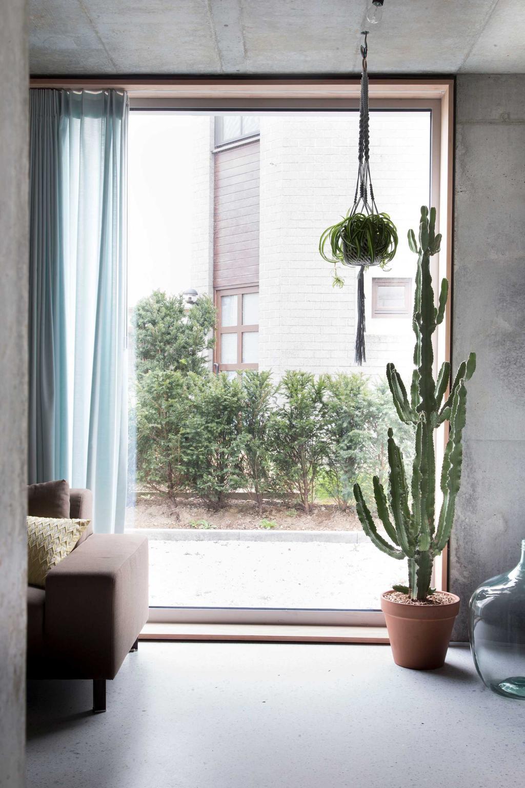 beton cactus