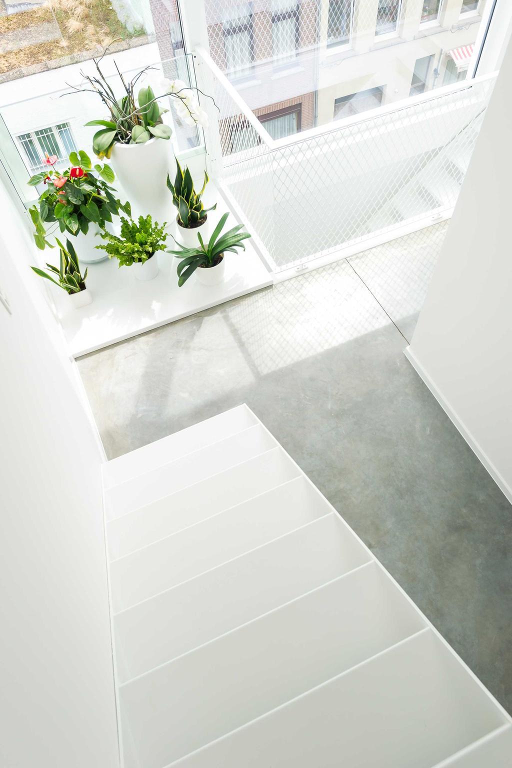 escalier lumiere plantes