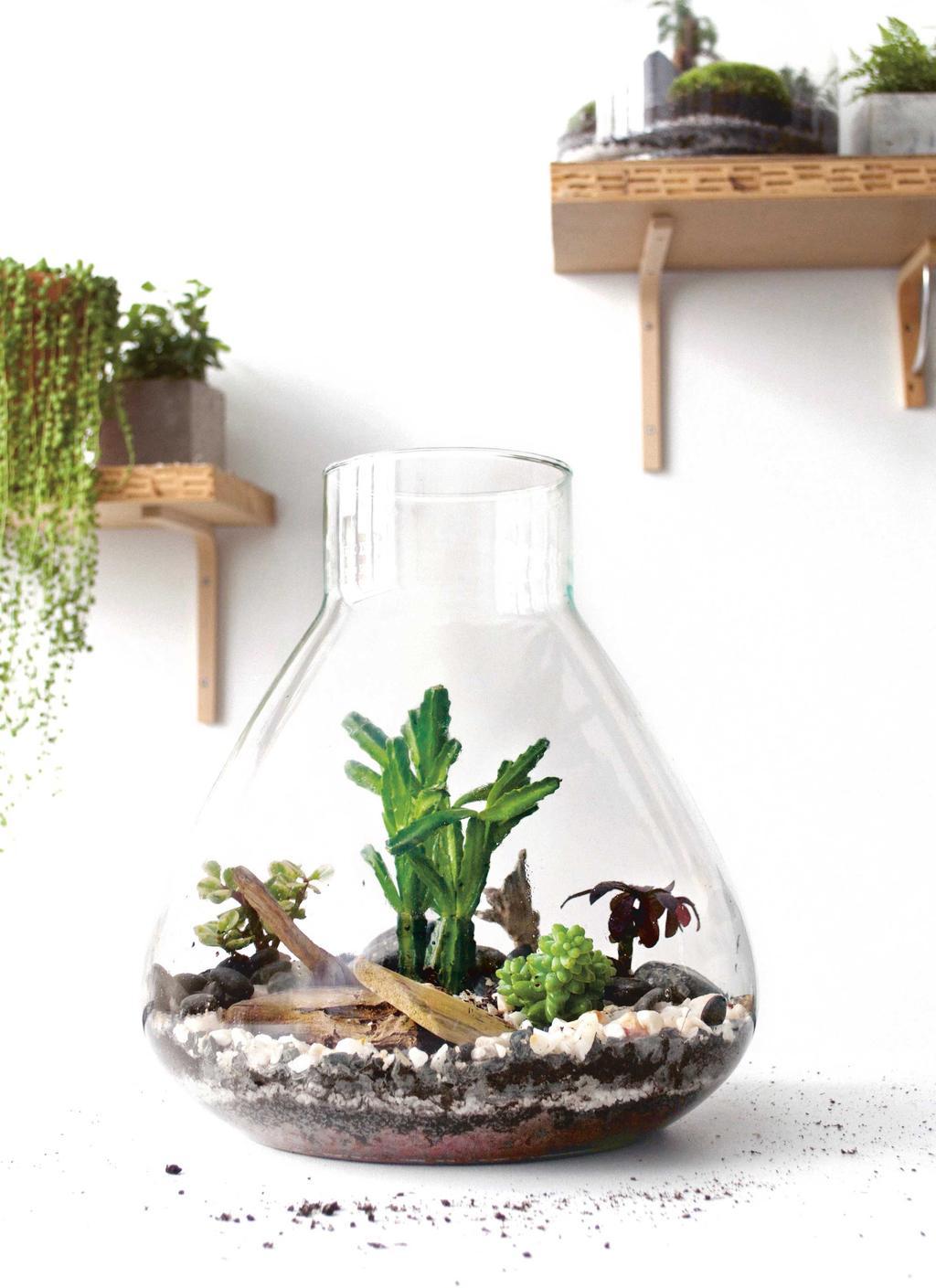 Een Terrarium plantje in glazen pot