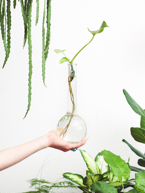 Blog Kristel Engelen zo stek je een plant