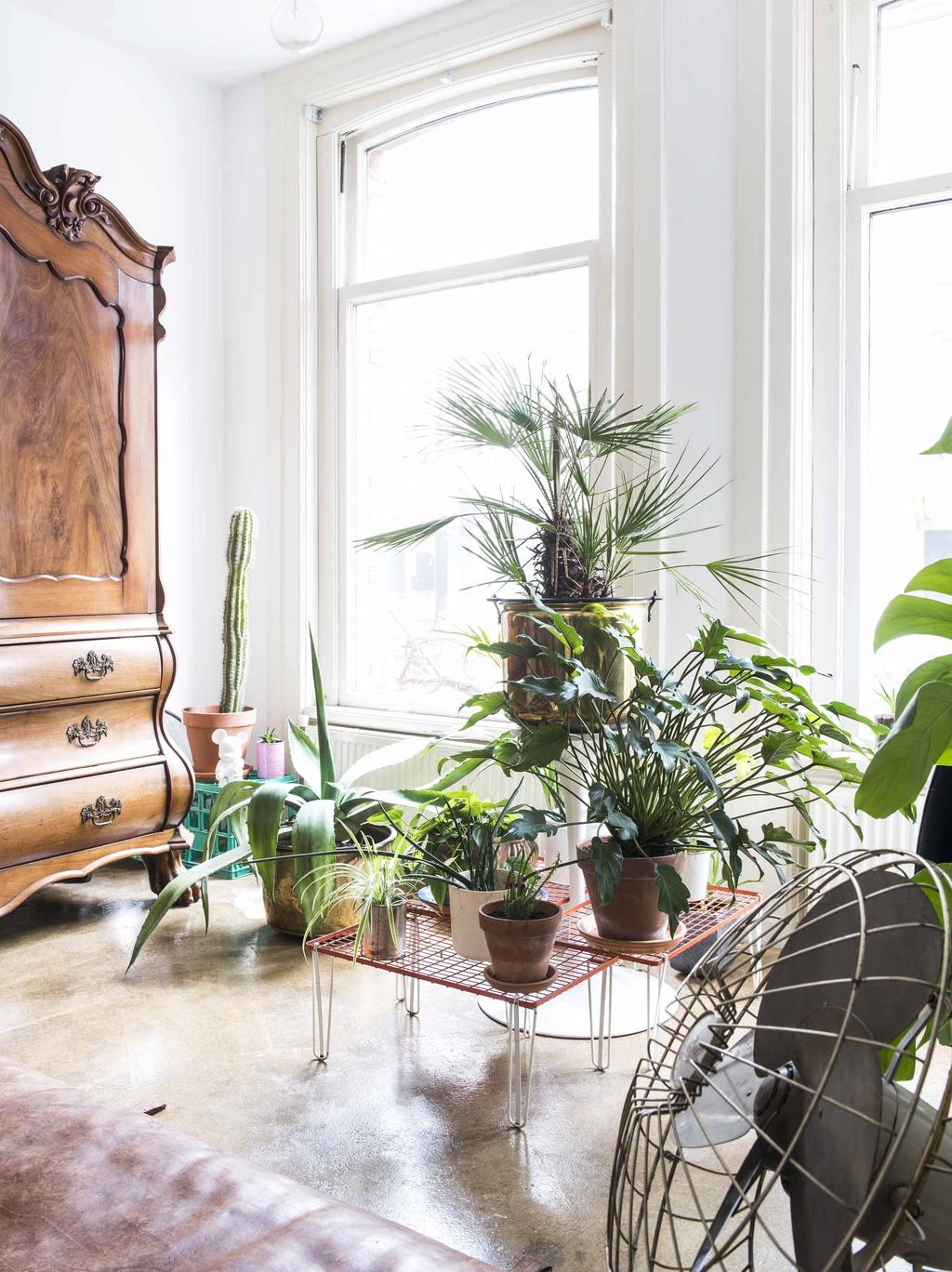 Planten bij ramen