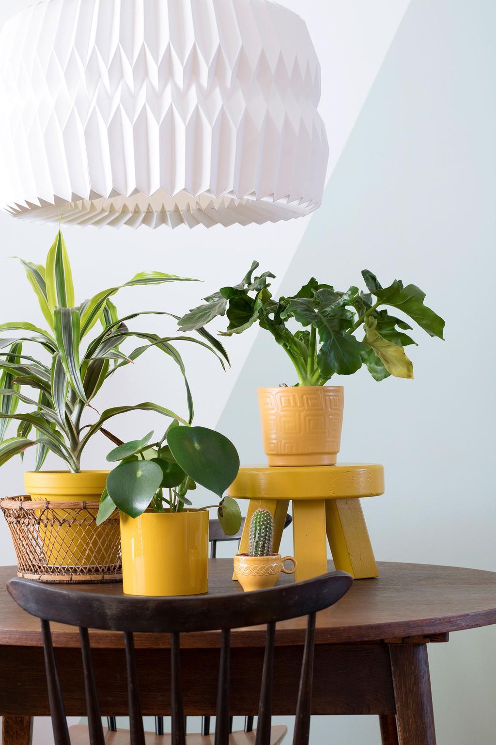 Eettafel met een verzameling planten in gele bloempotten