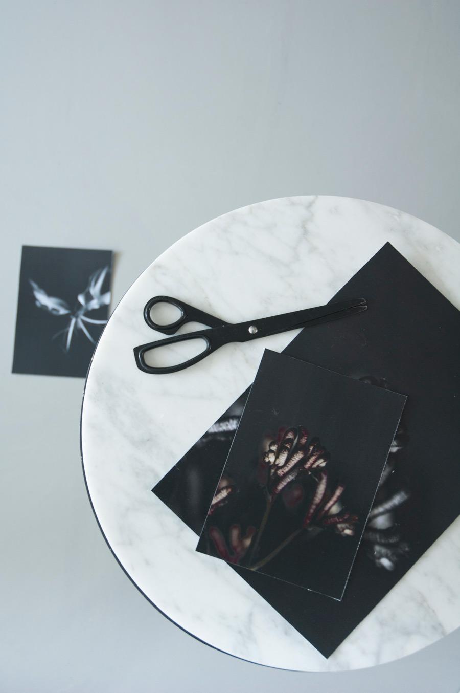 Zwart-wit foto's van planten