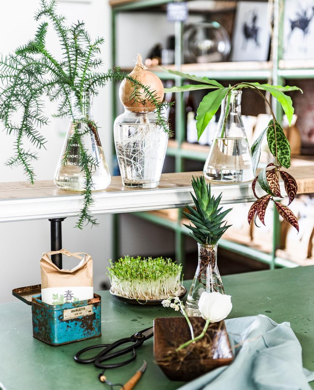 Planten in een vaas