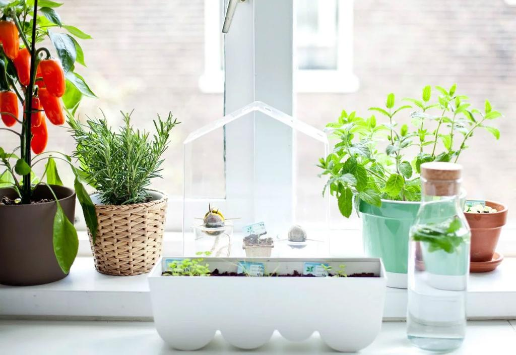 vensterbank kruidenpotten