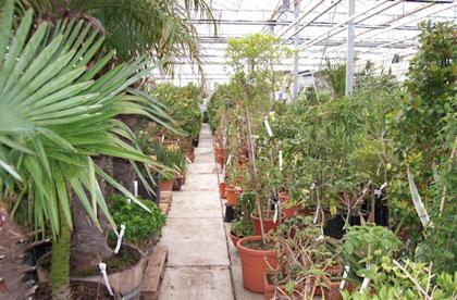 Winterstalling planten