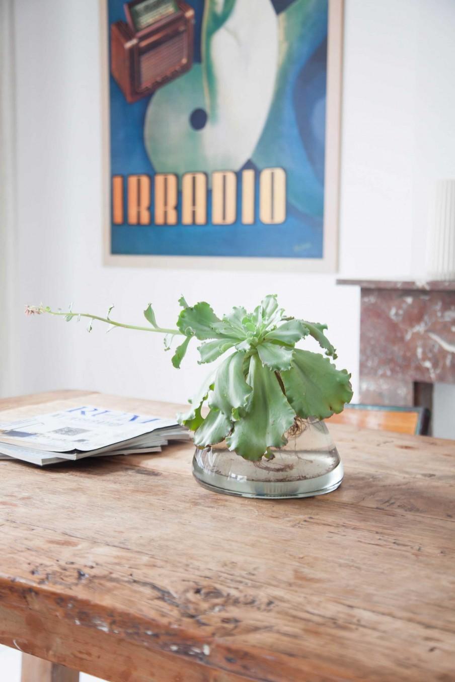 deco table plante